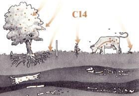 Het principe van C14